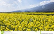 Yellow Flowers In Fall 10 Free Wallpaper
