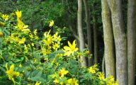 Yellow Flowers In Fall 12 Free Wallpaper