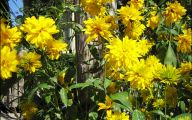 Yellow Flowers In Fall 13 High Resolution Wallpaper