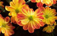 Yellow Flowers In Fall 16 Free Wallpaper