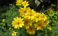 Yellow Flowers In Fall 18 Desktop Background