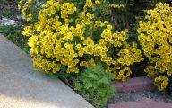 Yellow Flowers In Fall 2 Hd Wallpaper