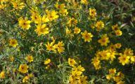 Yellow Flowers In Fall 23 Desktop Background