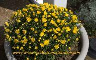 Yellow Flowers In Fall 24 Cool Hd Wallpaper