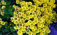 Yellow Flowers In Fall 26 Desktop Background