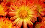 Yellow Flowers In Fall 28 Free Hd Wallpaper