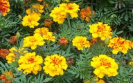 Yellow Flowers In Fall 3 Free Hd Wallpaper