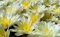 Yellow Flowers In Fall 32 Free Wallpaper