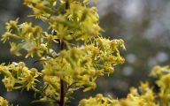 Yellow Flowers In Fall 35 Cool Hd Wallpaper