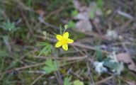 Yellow Flowers In Fall 4 Widescreen Wallpaper