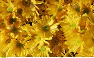 Yellow Flowers In Fall 6 Free Hd Wallpaper