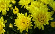 Yellow Flowers In Fall 8 Desktop Background