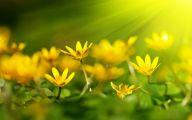 Yellow Flowers List 11 Free Wallpaper