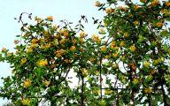 Yellow Flowers List 14 Free Wallpaper