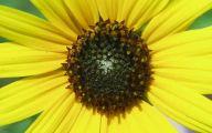 Yellow Flowers List 19 Wide Wallpaper