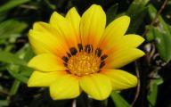 Yellow Flowers List 22 Wide Wallpaper
