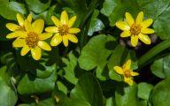 Yellow Flowers Of Spring Crossword 40 Desktop Background
