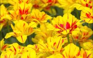 Yellow Flowers That Bloom In Spring 10 Widescreen Wallpaper