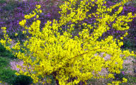 Yellow Flowers That Bloom In Spring 12 Background