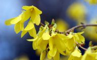 Yellow Flowers That Bloom In Spring 17 Cool Wallpaper