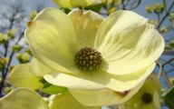 Yellow Flowers That Bloom In Spring 21 Widescreen Wallpaper