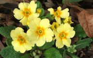 Yellow Flowers That Bloom In Spring 25 High Resolution Wallpaper