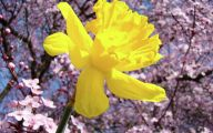 Yellow Flowers That Bloom In Spring 26 Widescreen Wallpaper