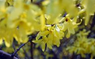 Yellow Flowers That Bloom In Spring 27 Background Wallpaper