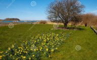 Yellow Flowers That Bloom In Spring 31 Free Wallpaper