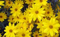 Yellow Flowers That Bloom In Spring 5 Free Wallpaper