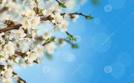 Apricot Blossom 35 Background