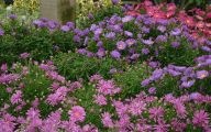 Aster Flower 30 Cool Hd Wallpaper