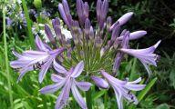 Aurora Blue Flowers 18 Background