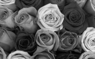Black And White Flower Backgrounds 9 Background Wallpaper