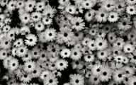 Black And White Flowers Wallpaper 25 Wide Wallpaper