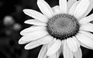 Black And White Flowers Wallpaper 26 Desktop Background