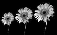 Black And White Flowers Wallpaper 28 Wide Wallpaper
