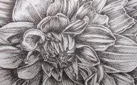 Black Dahlia Flowers 32 Free Wallpaper