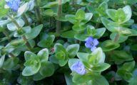 Blue Daze Flowers 18 Desktop Background