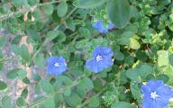 Blue Daze Flowers 2 Desktop Wallpaper