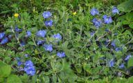 Blue Daze Flowers 35 Widescreen Wallpaper