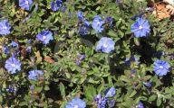 Blue Daze Flowers 4 Cool Wallpaper
