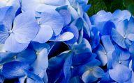 Blue Flowers Hd Wallpapers  1 Wide Wallpaper