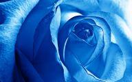Blue Flowers Hd Wallpapers  16 Desktop Wallpaper