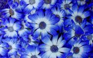 Blue Flowers Hd Wallpapers  22 Desktop Background