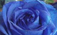 Blue Flowers Hd Wallpapers  25 Desktop Background