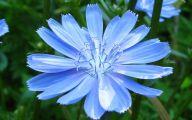 Blue Flowers Hd Wallpapers  4 Desktop Wallpaper