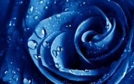 Blue Flowers Hd Wallpapers  9 Free Hd Wallpaper