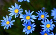 Blue Flowers Images  2 Wide Wallpaper
