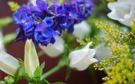 Blue Flowers In Fall  13 Desktop Background